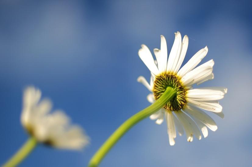 nature-lawn-blur-flower-large